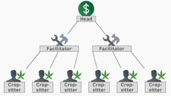 A graphic that shows the three-tier structure of a grow house syndicate.